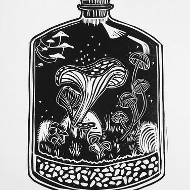 Fungi Terrarium