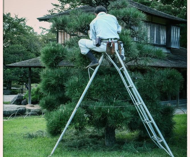 Taille d'arbre jardin