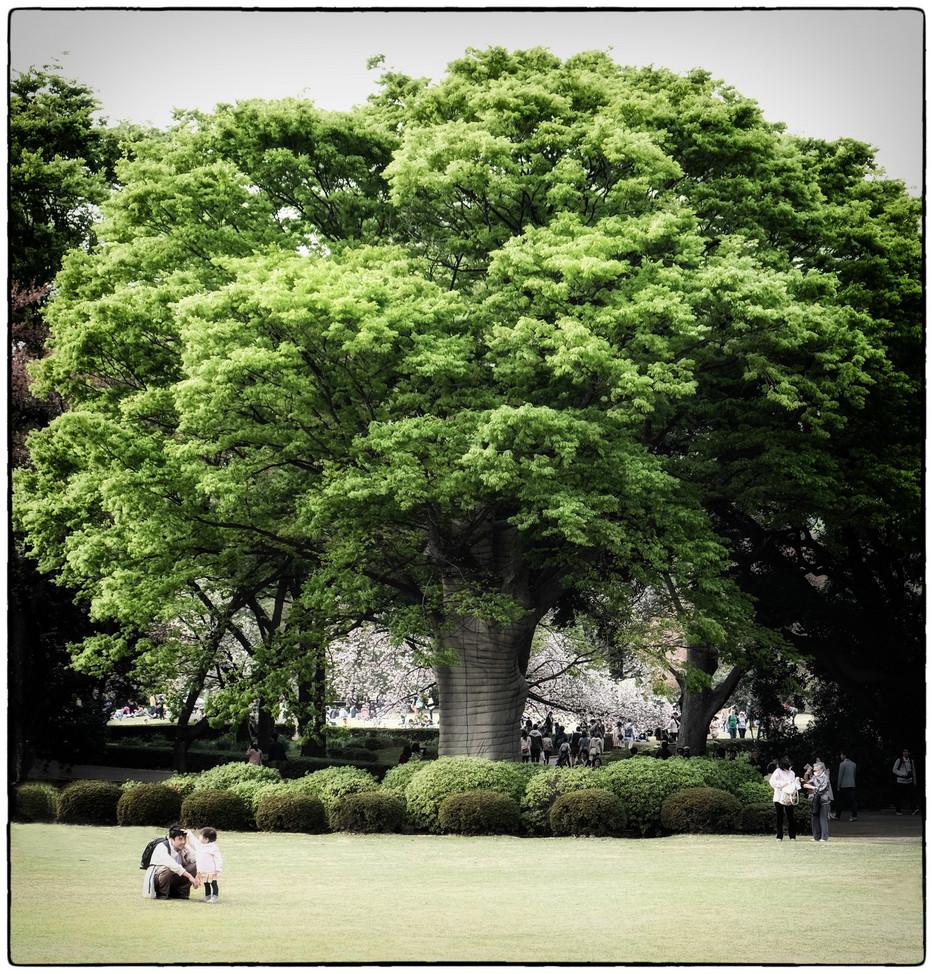 Tokyo Shinjuku jardin