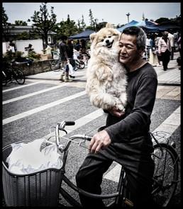 Chien à vélo_redimensionner.jpg