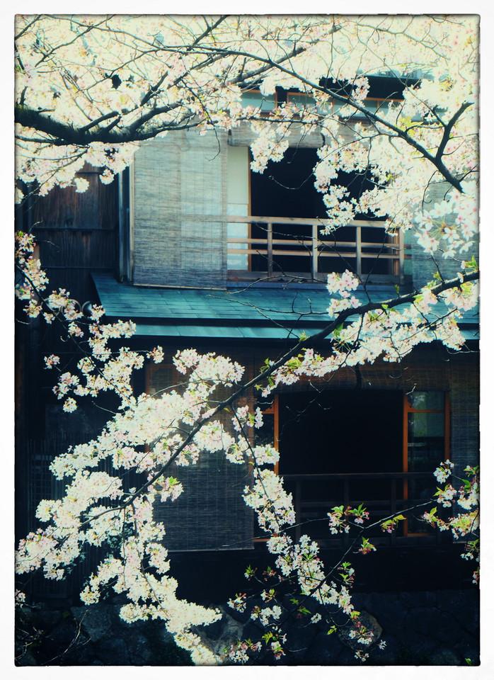 Kyoto - Maison en fleur