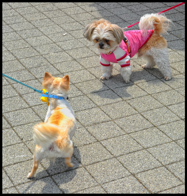Japon chat chiens 1f35_redimensionner.jp