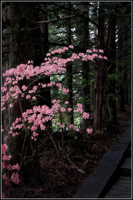 Nikko en fleurs