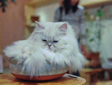 Japon chat chiens 90_redimensionner.jpg