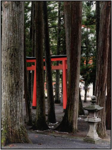 Mt Koya torii dans les bois