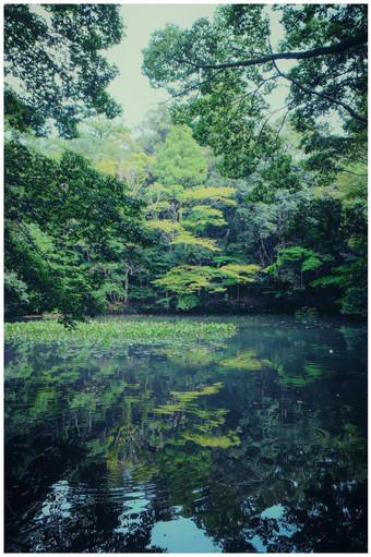 Ise Sanctuaire Naiku.jpg