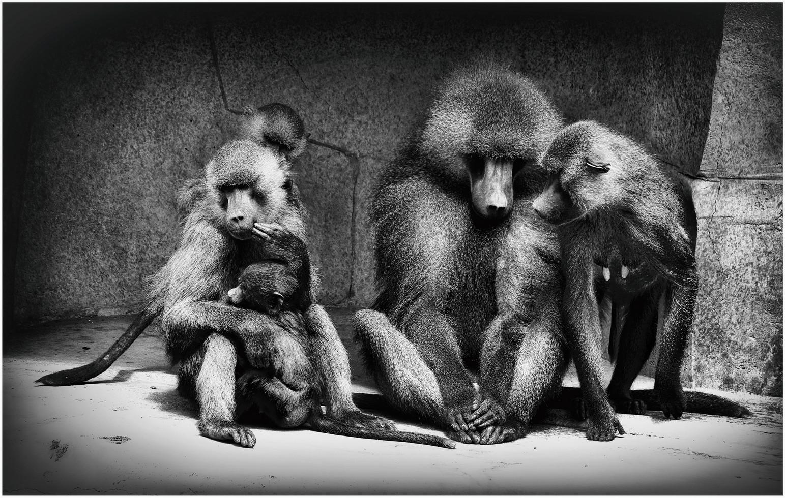 Famille gibbons en conversation