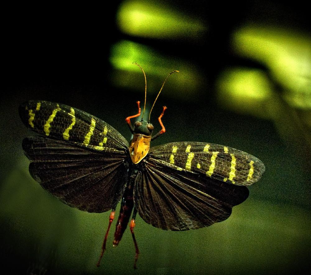 Papillon égaré