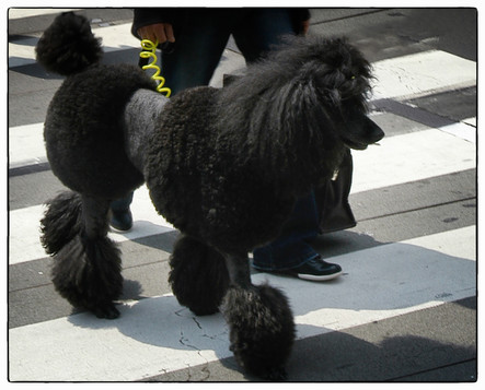 Japon chien de rue 35.jpg