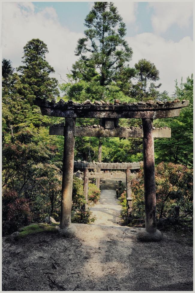Tori Parc Miyajima forêt primaire
