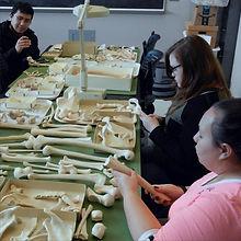ENMU Anthropology bone lab