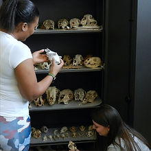 ENMU Anthropology bone lab