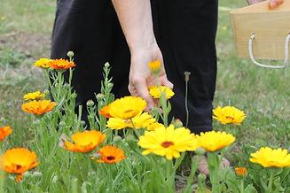 fleurs_savonnerie_terredesbulles.JPG