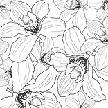 Orchid drawingWhiteMultiples.jpg