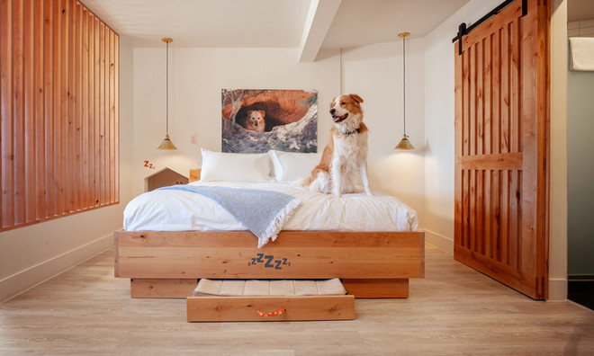 King Suite: King bed with pull out pet bed