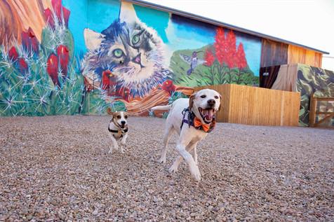 Pet Splash Park and Off-Leash Play Area