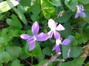#10 Violet Jelly