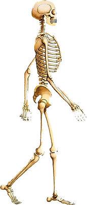 bones for life