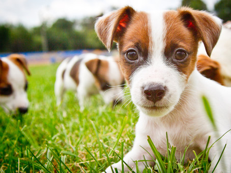 Confused about what puppy food to choose?