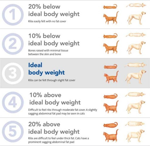 Visual guide on how to check the body condition score of your pet.