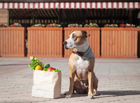 Can dogs be Vegetarian / Vegan?