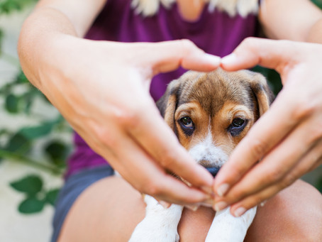 5 NEW things you need to know before you bring a puppy home!