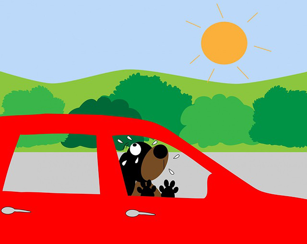 Dogs can die within 15 minutes in a hot car.