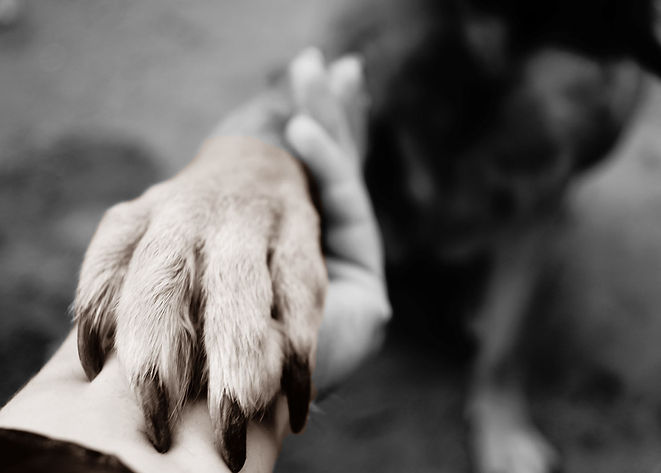 Dog's paw takes the palm of a human as the fingers wrap around dog's leg gently