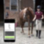 Horse riding equine exam training