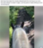 Screen Shot 2019-08-01 at 18.51.21.png