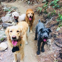dog walking - happy treks