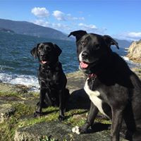 dog walking - beach dogs