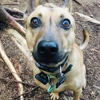 dog walking - hello!