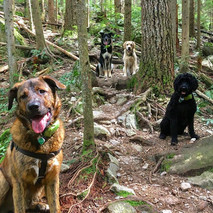 dog walking - hidding in the woods
