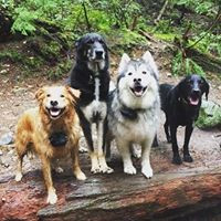 dog walking - good looking dogs