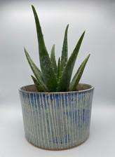 blue stripe planter with aloe