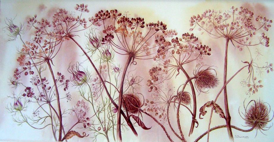 Teasels & Seedheads
