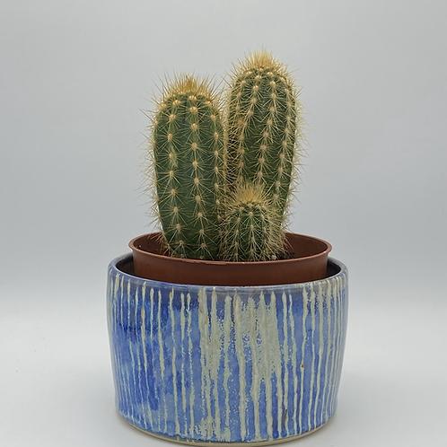 Small Capri blue stripe planter