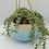 Thumbnail: Large norse blue drip round hanging planter