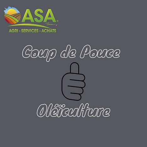 COUP DE POUCE OLEICULTURE.png