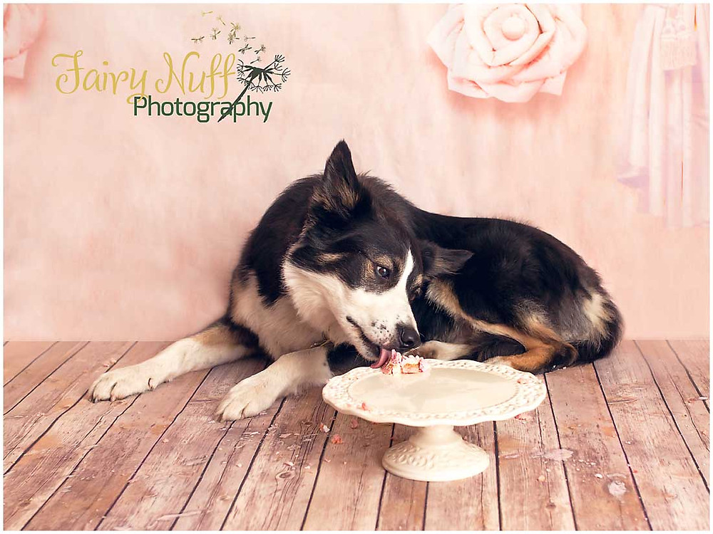 Pet Cake Smash - Fairy Nuff Photography