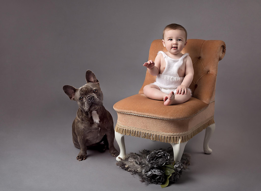 Studio session of 7 month old baby and french bulldog