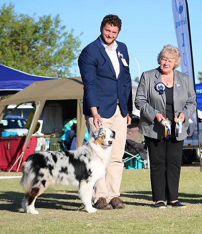 Australian Shepherd Blue Merle Puppy