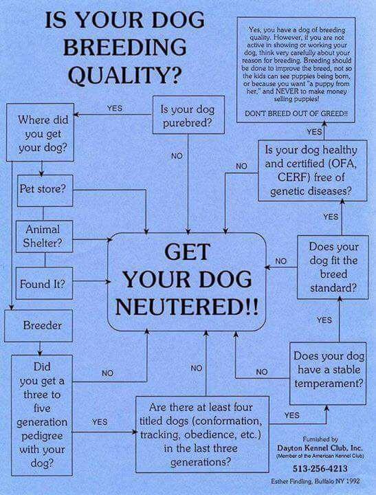 Is your dog breeding quality.jpg