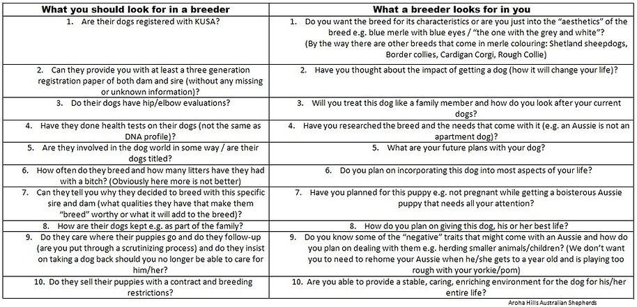 what you should look for in a breeder.jp