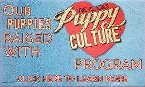 puppy culture.jpg