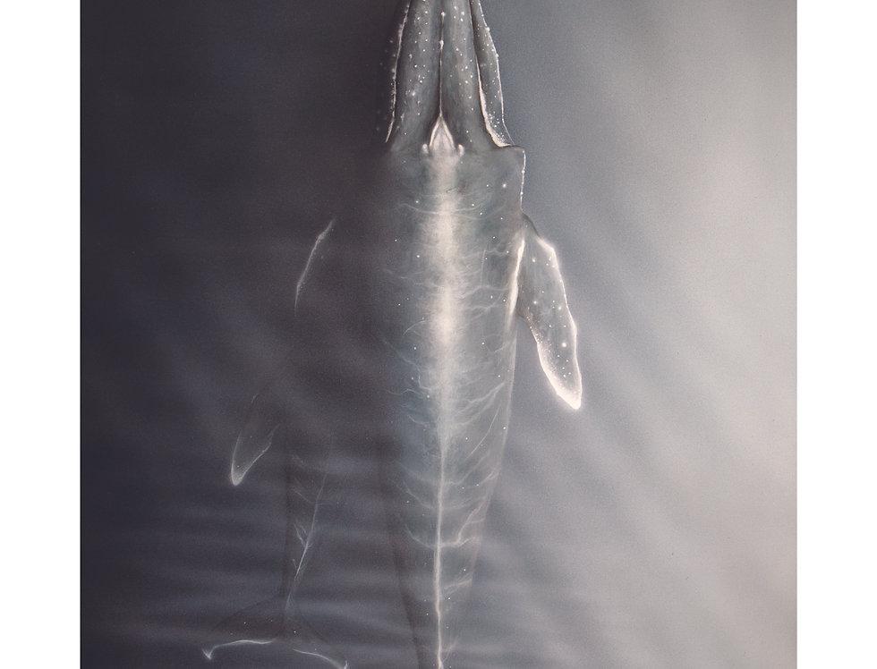 """Whale Print 20"""" x 36"""""""