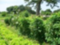 Oeuvre creusage puits Afrique 4