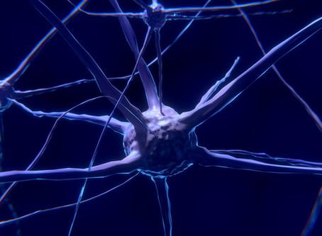 Connessioni neurali della corteccia cerebrale, ricercatori scoprono cosa le aumenta.