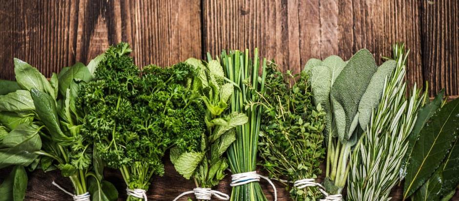 5 Herbs to Build Immunity